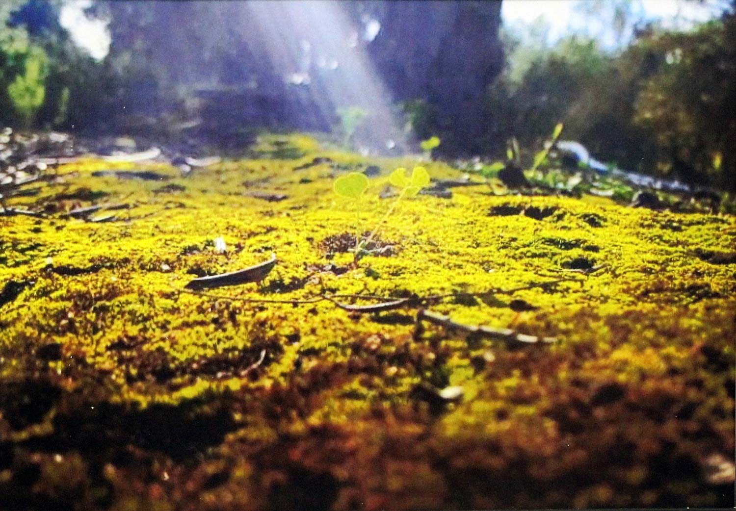 Student photograph of moss